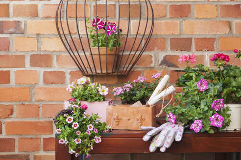 Various potted spring and summer flowers, gardening tools and gloves - GWF05761