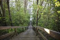 Germany, Ruegen, Cape Arkona, Koenigstreppe, steps at Cape Arkona - MAMF00260
