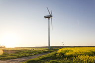 Germany, Ruegen, Cape Arkona, wind wheels at rape field - MAMF00269