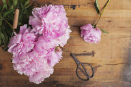 Pink peonies and scissors on wood - GWF05766