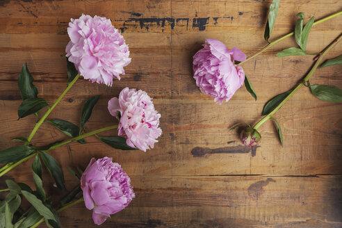 Pink peonies on wood - GWF05769