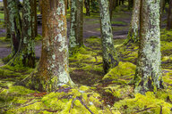 Portugal, Azores, Sao Miguel, Moss over trees on Furnas lake - RUNF00801