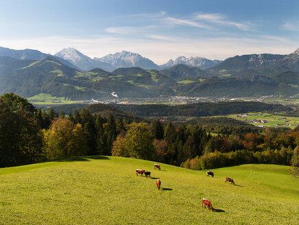 Austria, Salzburg State, Tennengau, view from Krispl to Hallein, cattle - WWF04675