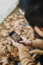 Close-up of man taking cell phone picture of autumn leaves - JRFF02298