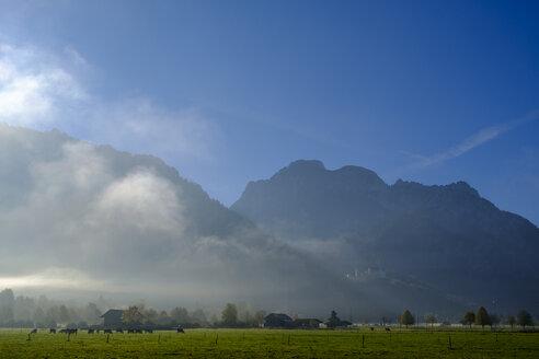 Germany, Bavaria, Swabia, East Allgaeu, near Schwangau - LBF02331
