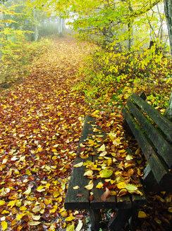 Austria, Salzkammergut, Mondsee, bench and forest track in autumn - WWF04705