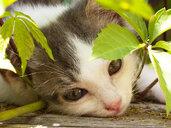 Kitten portrait - WWF04764
