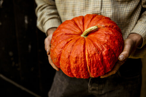 High angle close up of farmer holding red Cinderella pumpkin. - MINF09869