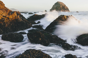 Shellfish covered rocks in foreground with crashing waves along shoreline at dusk, McClures Beach, Point  Reyes National Seashore, California, USA. - MINF10031
