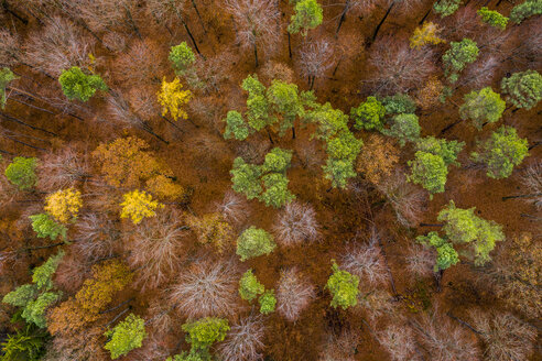 Germany, Baden-Wuerttemberg, Swabian Franconian forest, Aerial view of forest in autumn from above - STSF01820