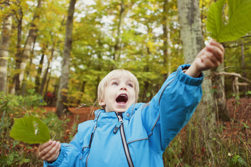 Happy boy holding leaves while standing in forest - ASTF01326