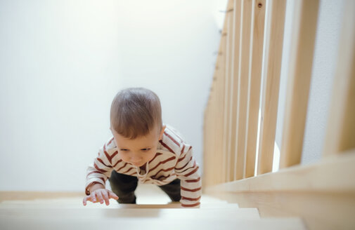 Toddler boy climbing up stairs at home - HAPF02835