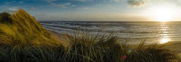 Denmark, Jutland, Lokken, dune landscape and North Sea - UMF00884