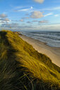 Denmark, Jutland, Lokken, dune landscape and North Sea - UMF00887