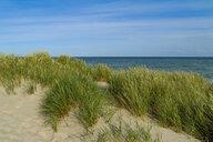 Denmark, Jutland, Skagen, Grenen, dune landscape - UMF00905