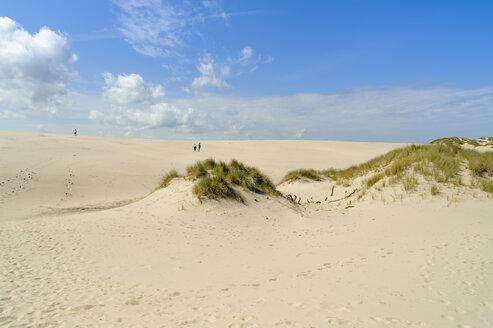 Denmark, Jutland, Rabjerg Mile shifting dune - UMF00908