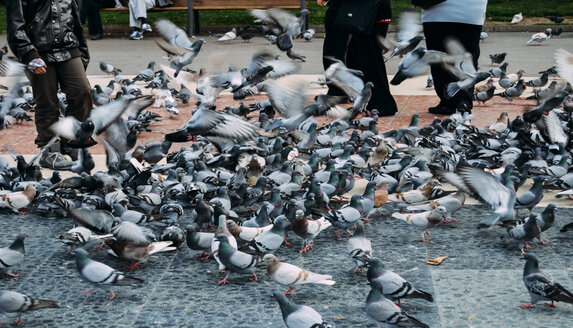 Low section of people feeding pigeons - ASTF01801