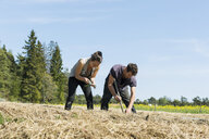 Two gardeners working on farm in Sweden - FOLF09688