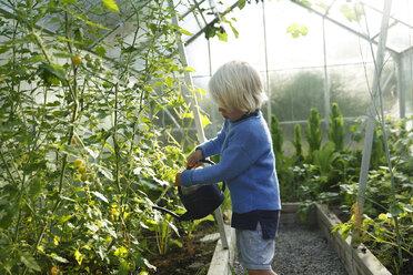 Boy watering plants in greenhouse - FOLF10217