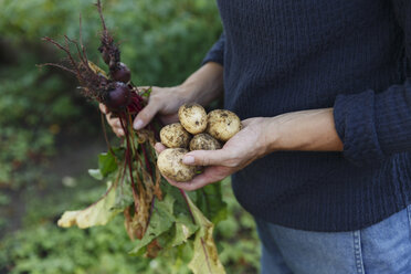Hands holding freshly picked vegetables - FOLF10223