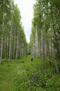 Finland, Kuopio, mother and daughter walking in a birch forest - PSIF00204