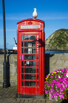 UK, England, Devon, Ilfracombe, Seagull sitting on a British telephone booth - RUNF00924