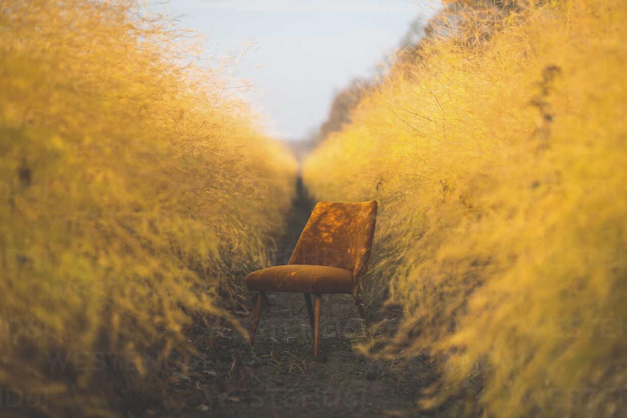 Orange chair in asparagus field in autumn - ASCF00908 - Anke Scheibe/Westend61