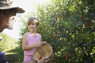 Grandfather and granddaughter picking currants in garden - HEROF04692