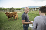 Father and son talking near cows in field on rural farm - HEROF04884