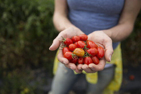 Close up woman holding fresh harvested red tomatoes - HEROF05082