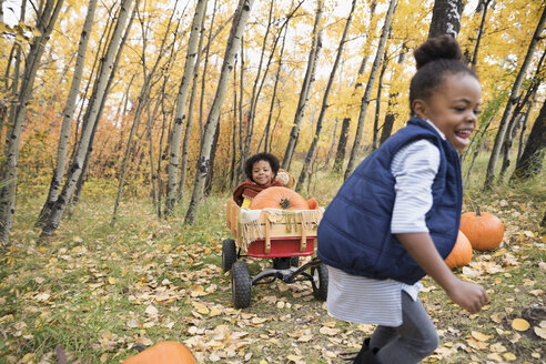 Enthusiastic girl pulling sister and autumn pumpkins in woods - HEROF05151