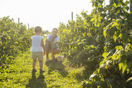 Mother and little daughter picking berries in summer - DIGF05590