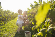 Happy mother and little daughter picking berries in summer - DIGF05596