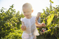 Deutschland, München, Mutter 36 Jahre, Kind 1 Jahr, Familie, Beeren pflücken, Natur, Sommer - DIGF05599