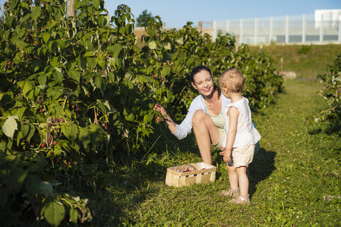 Mother and little daughter picking raspberries together in summer - DIGF05608