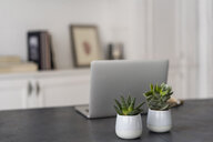 Laptop and potted plants on a desk - AFVF02219