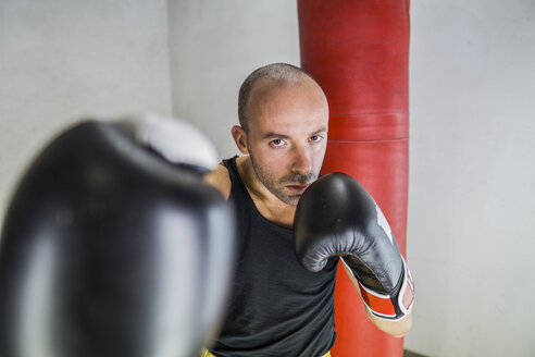Portrait of boxer boxing in gym - FBAF00246