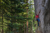 Rock climber scaling rock face close to trees, Squamish, Canada - CUF46922