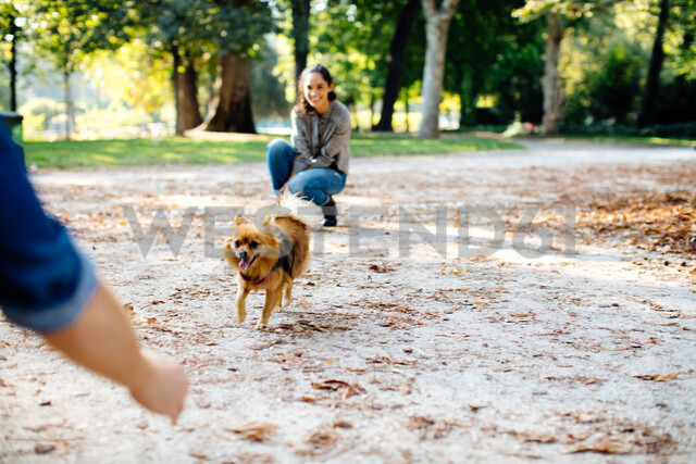 Couple with pet dog in park - CUF47603 - Sofie Delauw/Westend61