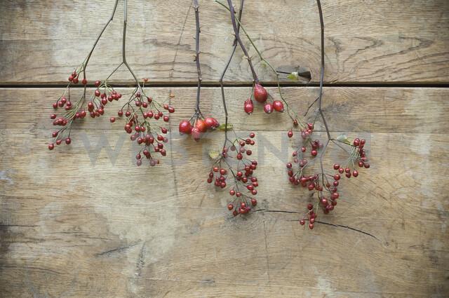 Verschiedene Hagebutten, (Rosa canina) auf rustikalem Holzuntergrund, Fruechte der Rose, Studio - ASF06269