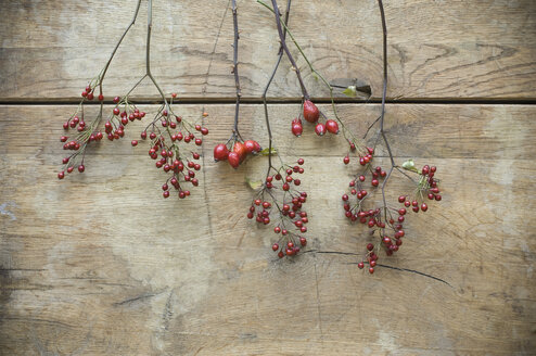 Rosehips on wood - ASF06269
