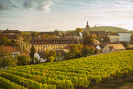 Germany, Bavaria, Bamberg, vineyard and cityscape - TAMF01133