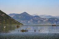 Ausflugsboot auf Skutarisee, nahe der Moraca-Mündung, Nationalpark Skadarsee, Provinz Podgorica, Montenegro - SIEF08321