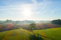 Field landscape in autumn sunlight, elevated view, Netherlands - CUF47938