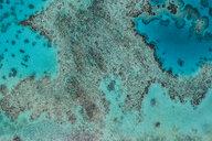 Reef life, Alacranes, Campeche, Mexico - CUF48037