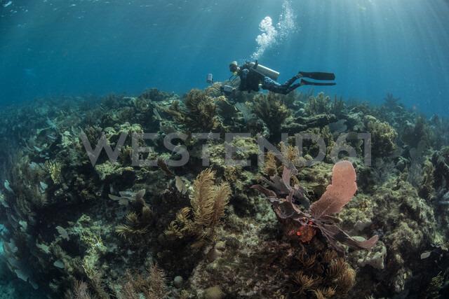 Diver exploring reef life, Alacranes, Campeche, Mexico - CUF48040 - Rodrigo Friscione/Westend61