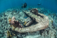 Divers exploring reef life and old wrecks, Alacranes, Campeche, Mexico - CUF48043