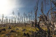 Burnt forest in Angelsberg, Sweden - FOLF10296