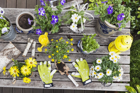 Gardening, planting of summer flowers in vintage pots, gardening tools, secateurs and garden gloves on vintage garden table, Petunia