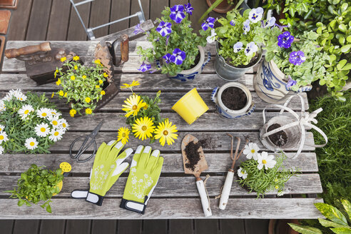 Different summer flowers and gardening tools on garden table - GWF05778